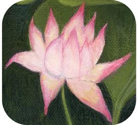 Lotus par Lune